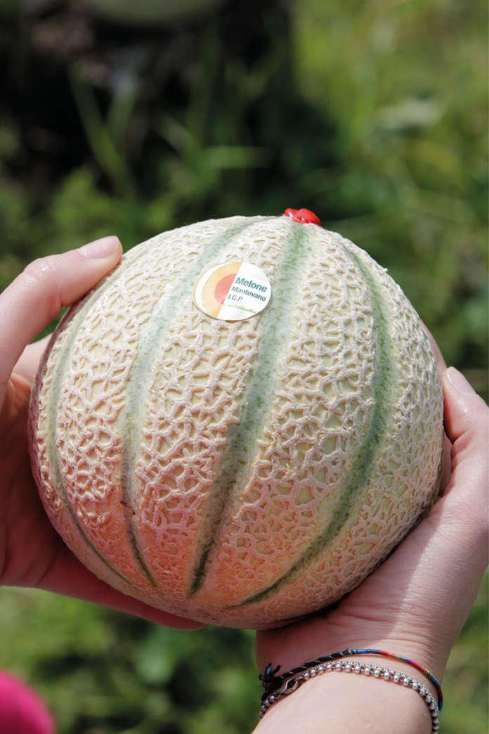 Il Melone Mantovano Igp: il maltempo degli ultimi giorni, con pioggia e basse temperature, ha rallentato l'arrivo del prodotto sui mercati
