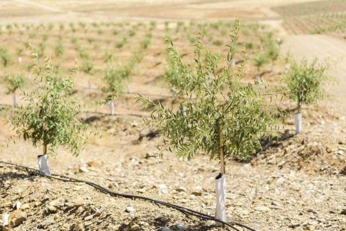 Le piantagioni di Veracruz nella regione di Beira Baixa, in Portogallo, produrranno 4mila tonnellate di mandorle