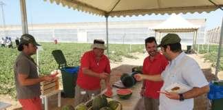Il melone Santa Claus è stato presentato al Business Event For Experts su meloni e cocomeri. L'evento è stato organizzato da Nunhems nel suo campo sperimentale a La Palma (Cartagena)