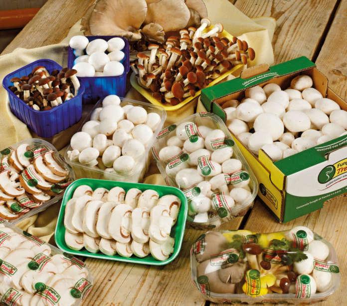 Funghi prodotti reparto