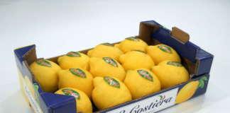 limoni la costiera