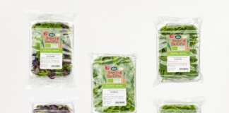 sipo babyleaf verdure bio