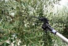 Hercules, abbacchiatore elettrico prodotto da Campagnola per la raccolta delle olive. Viene ora proposto in due nuove versioni: Linea 58 e Linea Eco