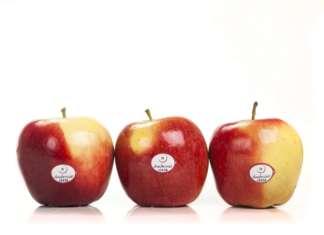 """La mela Ambrosia è caratterizzata da un gusto dolcissimo e consistenza croccante. Il claim è """"Divina in ogni momento"""""""
