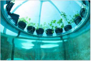 L'irrigazione avviene per condensazione dell'aria delle biosfere sulle pareti
