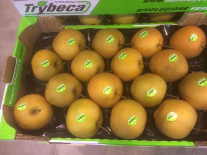 La pera Nashi nasce alle falde del Monviso, nel Cuneese, in Piemonte