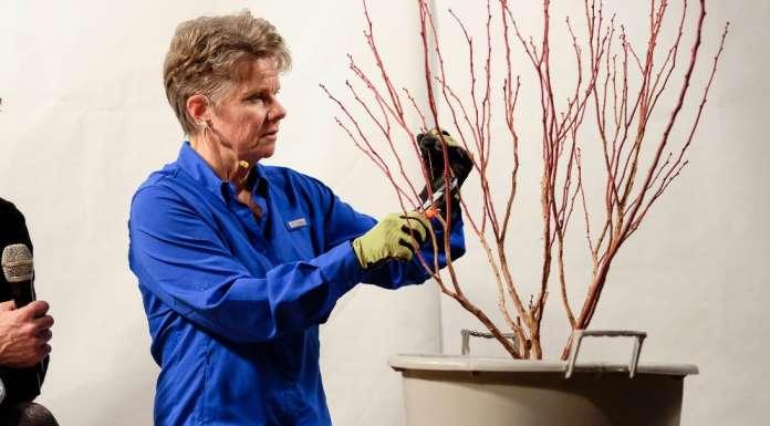 Bernadine C. Strik, docente all'Università statale dell'Oregon (Usa), è specialista in coltura di bacche e massima esperta di mirtilli