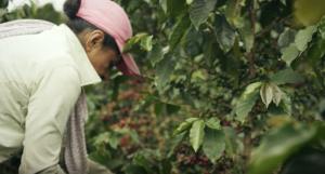 Thank My Farmer supporta i piccoli produttori di caffè e valorizza i progetti sostenibili