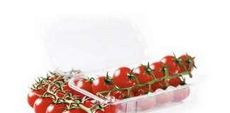 Il pomodoro ciliegino Paskualeto, sviluppato dall'azienda sementiera Syngenta