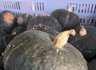 Zucca Seno Seeds, varietà Big Max SS 1011