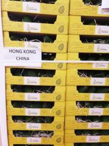 Sicilia Avocado esporta frutta esotica in Cina