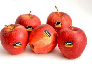 Il clima favorevole ha esaltato le qualità di Evelina, la varietà di mela club di Melinda