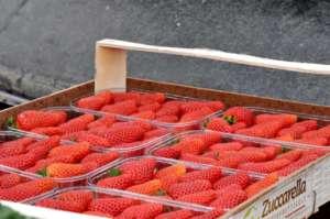 Fragole Candonga prodotte da Zuccarella