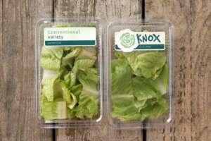 L'innovativa lattuga Knox: ha vinto Fruit Logistica Innovation Awards nel 2017
