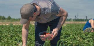 voucher agricoltura sindacati