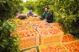 a frutta, bio, è fornita da piccoli produttori