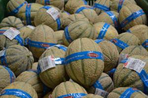 Meloni prodotti dalla Op Francescon