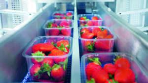 Ilip è leader a livello europeo nelle soluzioni d'imballaggio, innovative e sostenibili