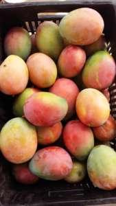 Mango africano prodotto da Amalib Sarl