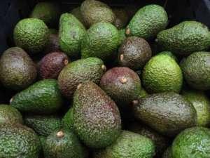 Avocado Amalib Sarl, prodotto in Senegal