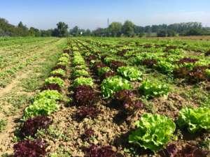 La domanda di prodotti biodinamici è in continua crescita anche in Italia