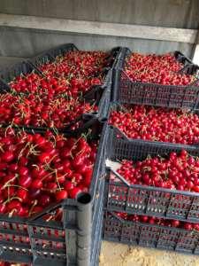 Le ciliegie dell'azienda agricola di Carlo Cracco