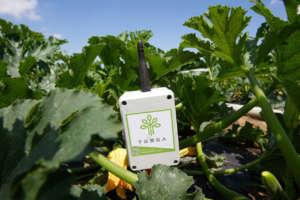 Progetto Sapience, sensori in campo di zucchine