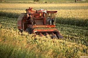 La coltivazione del mais avviene prevalentemente in Emilia-Romagna, Lombardia e Veneto