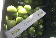 Bergamotto, il superfood made in Calabria dal consorzio Unionberg