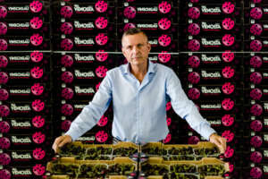 Reinhard Ladurner, responsabile vendite ciliegie VIP Val Venosta