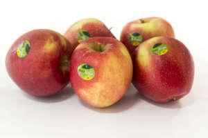 SweeTango si distingue per la croccantezza e perfetto mix tra acidità e dolcezza