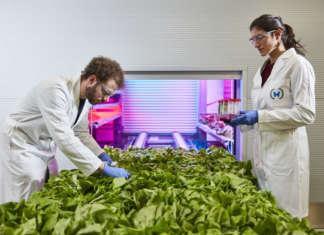 La coltivazione intensiva verticale automatizzata riduce il consumo energetico e idrico e aumenta il raccolto