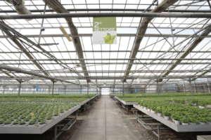 Serre vertical farming Storie Aromatiche