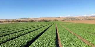 Terre di Federico produce ortaggi nel Vulture, al confine tra Puglia e Basilicata