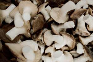 Funghi cardoncelli MìPulia