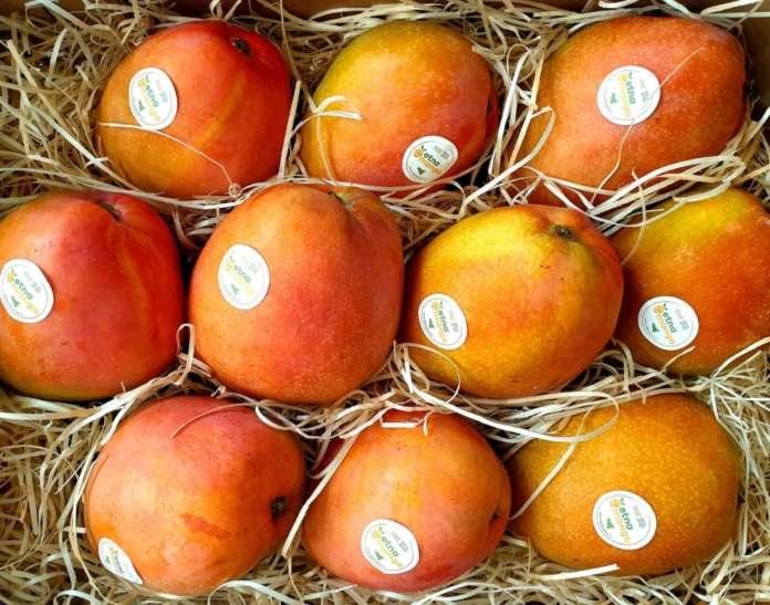 Etna Mango, mango made in Sicilia