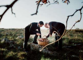 MìPulia ha una tradizione trentennale nella fungicoltura, svolta nella Murgia pugliese