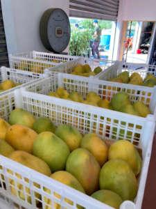 Mango siciliano a marchio Mc Garlet