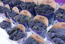 Il broccolo Redi di Bejo Iberica, vincitore degli Innovation Hub Awards a Fruit Attraction 2020