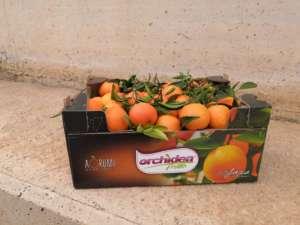 Clementine commercializzate da Orchidea Frutta