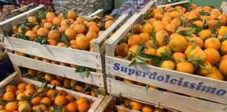 Clementine locali distribuite da Country Fruit al Mercato ortofrutticolo di Taranto