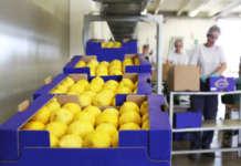 Agricola Lusia è uno tra i più qualificati fornitori italiani di agrumi per la Gdo