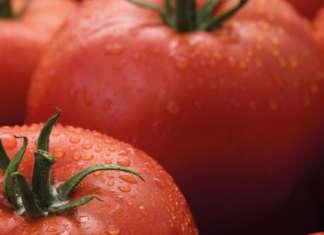 Il Tomato Brown Rugose Fruit Virus colpisce pomodoro e peperone
