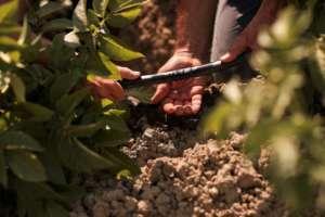 Le tecnologie dell'agricoltura di precisione puntano al risparmio idrico