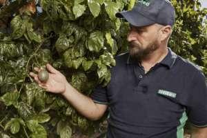L'irrigazione smart si applica in campo aperto e in serra, sia su colture arboree che erbacee