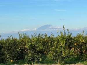 Zuccarello produce arance in provincia di Catania e Siracusa