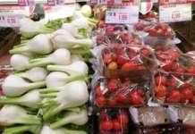 Non decolla la richiesta dei finocchi: prezzi ancora stabili