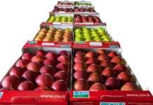 Civ sviluppa importanti programmi di miglioramento genetico del melo
