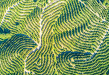 Foto aerea di un agrumeto Lusia