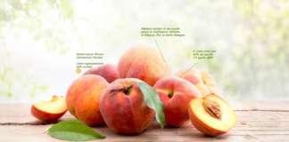 Valfrutta valorizza i soci agricoltori attraverso il racconto di filiera grazie al Qr Code